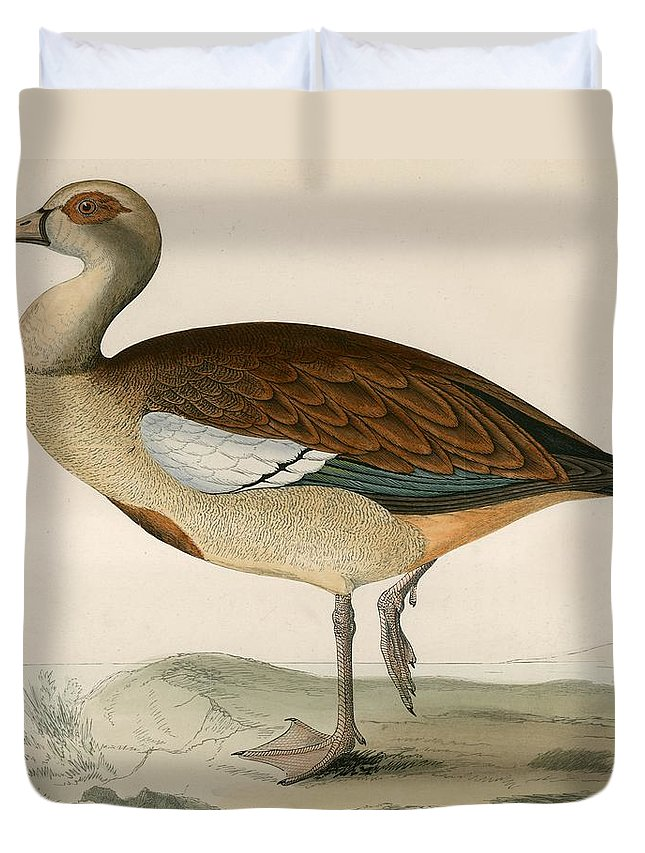 Birds Duvet Cover featuring the photograph Egyptian Goose by Beverley R. Morris