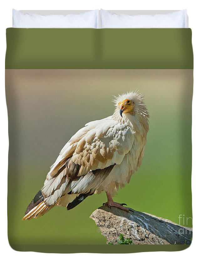 Nature Duvet Cover featuring the photograph Egyptian Vulture by Anthony Mercieca