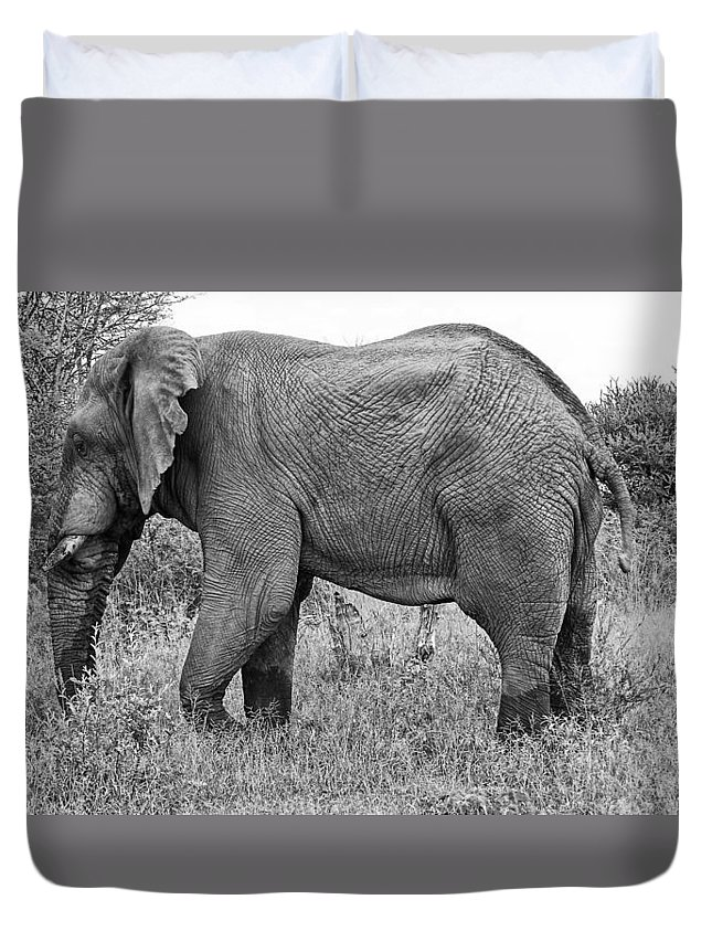 Elephant Bull Duvet Cover featuring the photograph Elephant Bull In Black And White by Douglas Barnard