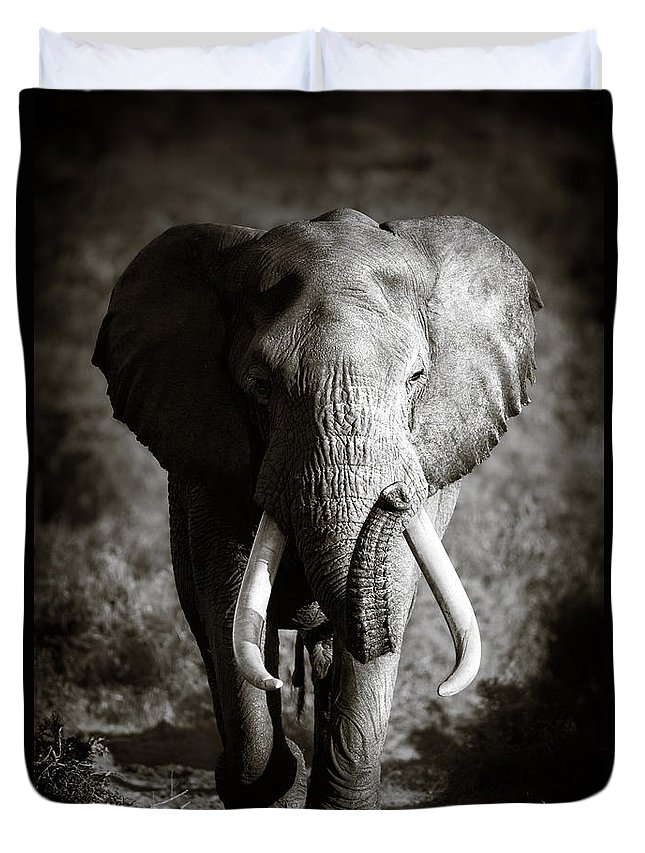 Elephant Duvet Cover featuring the photograph Elephant Bull by Johan Swanepoel