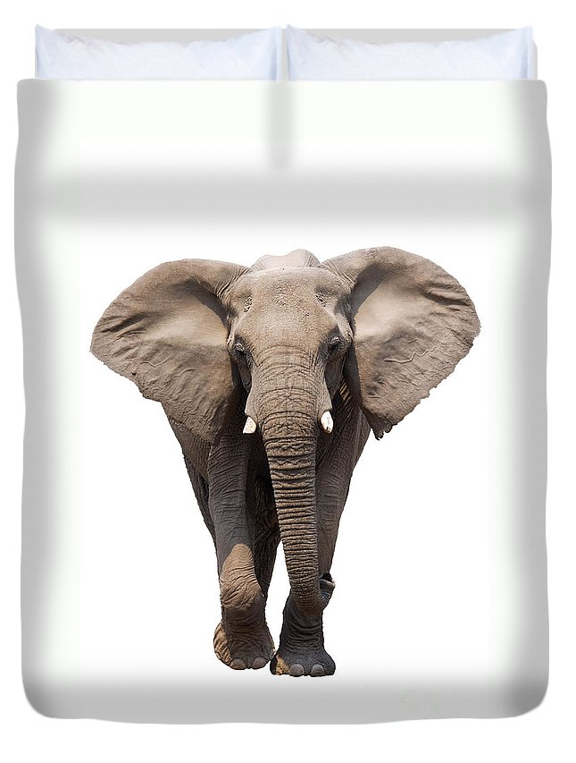Wild Duvet Cover featuring the photograph Elephant Isolated by Johan Swanepoel