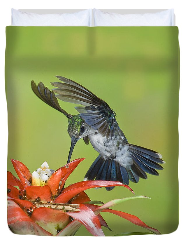 Animal Duvet Cover featuring the photograph Emerald Woodnymph by Anthony Mercieca