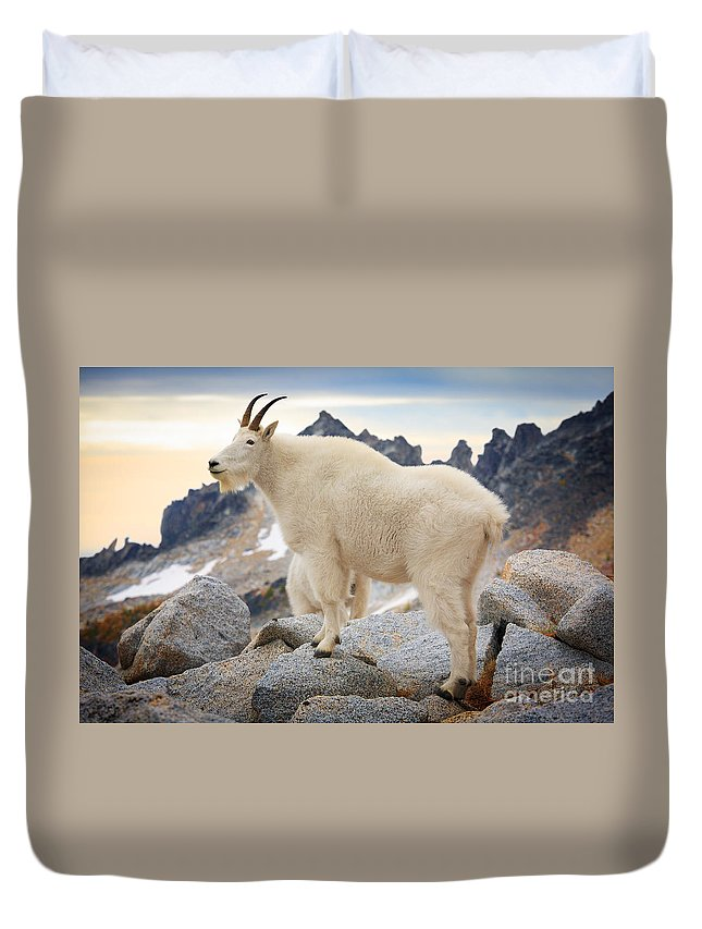 Alpine Lakes Wilderness Duvet Cover featuring the photograph Enchantment Goat by Inge Johnsson
