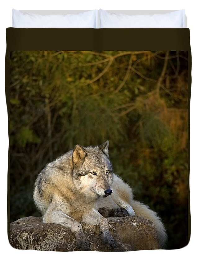 Wolf Duvet Cover featuring the photograph End Of Day by Jack Milchanowski
