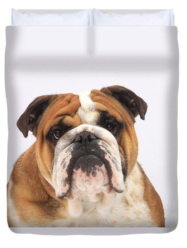 English Bulldog Duvet Cover