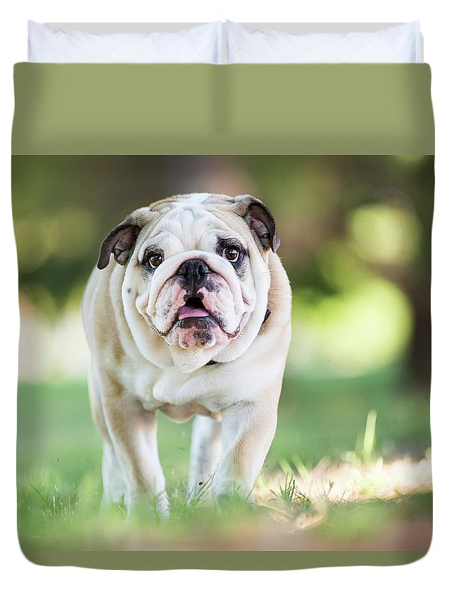 Pets Duvet Cover featuring the photograph English Bulldog Puppy Walking Outdoors by Purple Collar Pet Photography