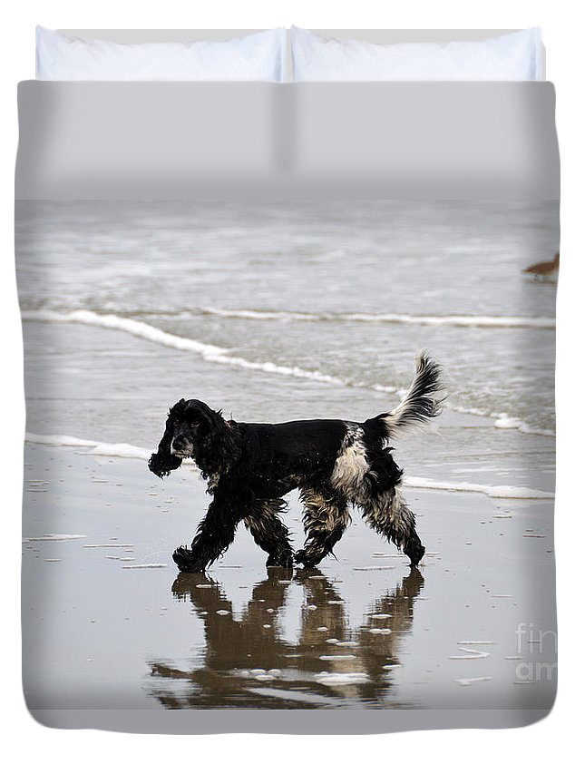 Spaniel Duvet Cover featuring the photograph English Cocker Spaniel On The Beach by Catherine Sherman