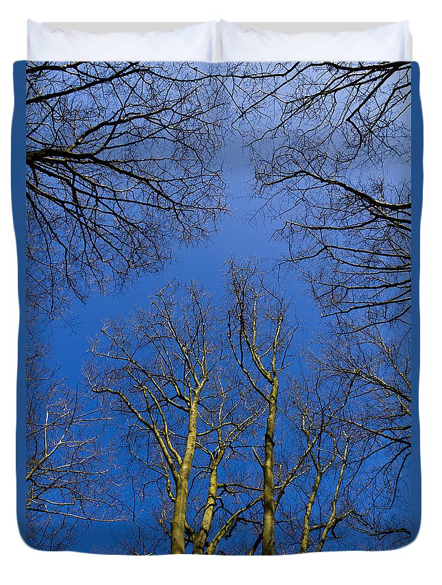 Tree Duvet Cover featuring the photograph English Forest Trees by David Pyatt