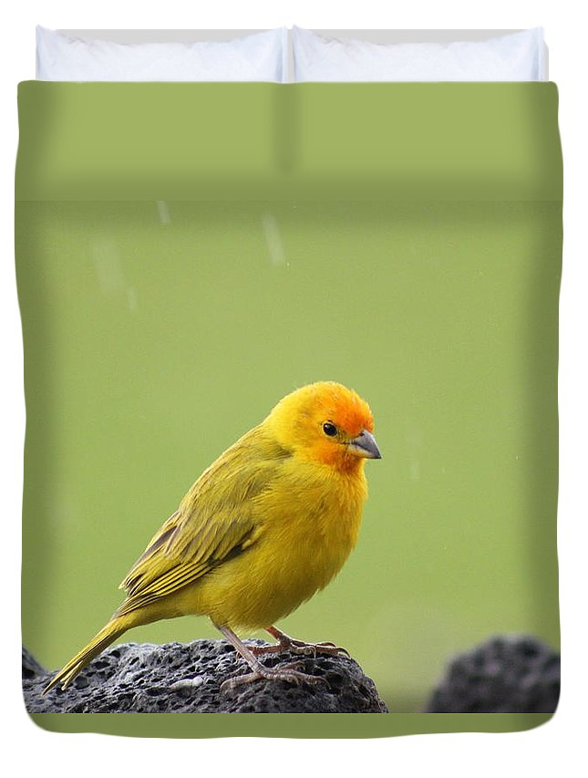 Yellow Canary Duvet Cover featuring the photograph Enjoying The Rain by Kimberly Reeves