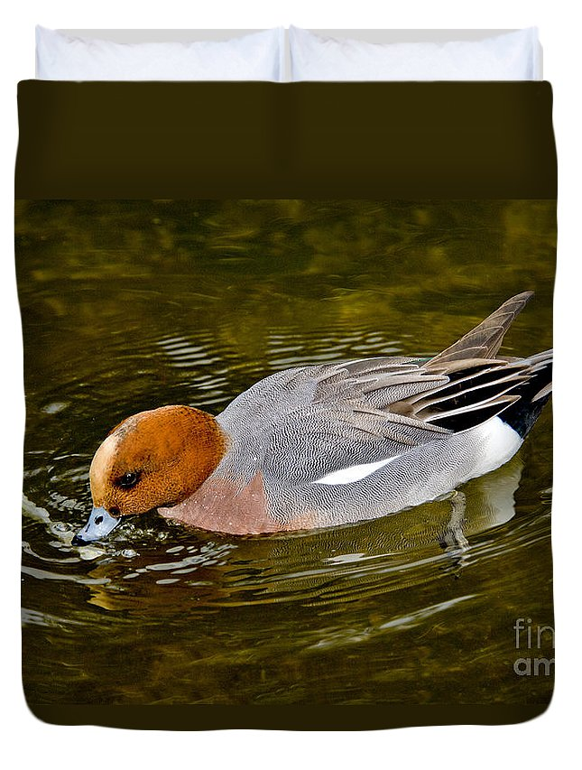 Animal Duvet Cover featuring the photograph Eurasian Wigeon Feeding by Anthony Mercieca