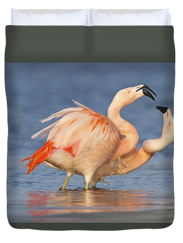 Nis Duvet Cover featuring the photograph European Flamingo Pair Courting by Ronald Kamphius