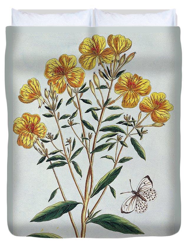 L'onagra En Arbre Duvet Cover featuring the painting Evening Primrose by Pierre-Joseph Buchoz