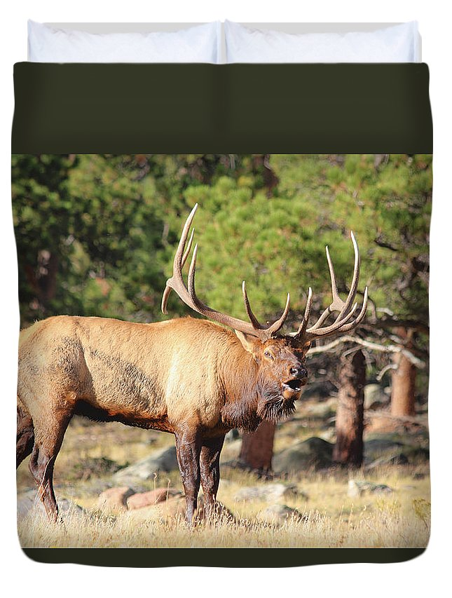 Elk Duvet Cover featuring the photograph Evening Roundup by Shane Bechler