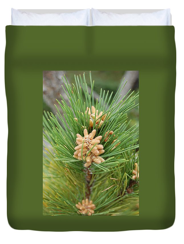 Linda Brody Duvet Cover featuring the photograph Evergreen by Linda Brody