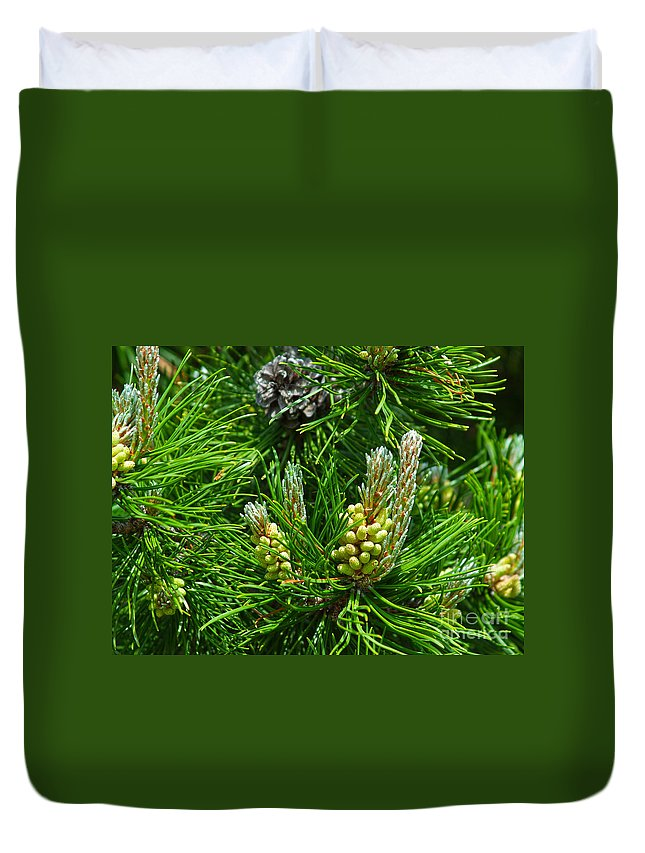 Evergreen Duvet Cover featuring the photograph Evergreen by M Dale