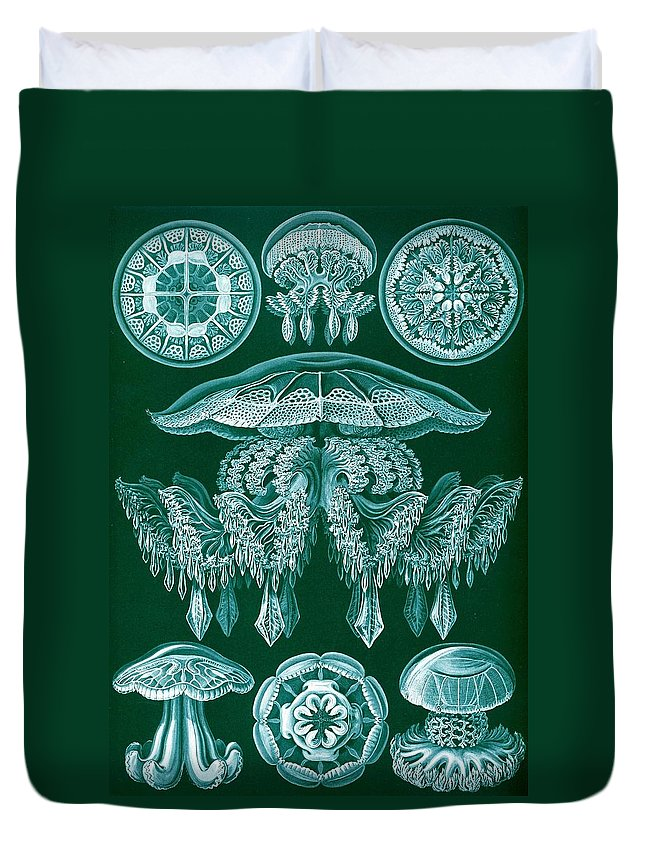 Zoology Duvet Cover featuring the drawing Examples Of Discomedusae by Ernst Haeckel