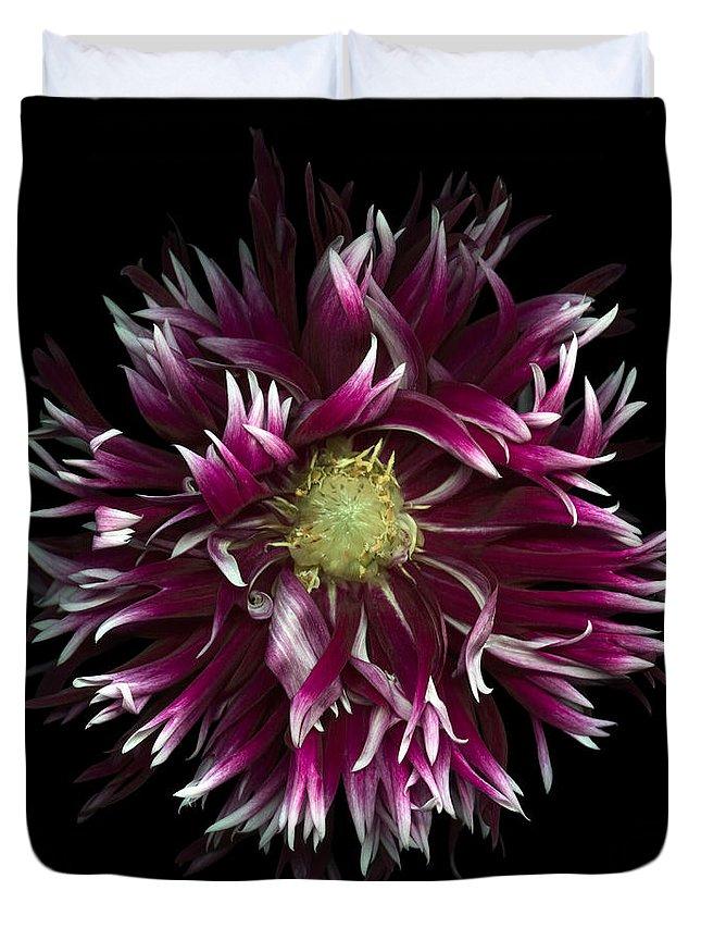 Flowers Duvet Cover featuring the photograph Exotic Dahlia by Oscar Gutierrez