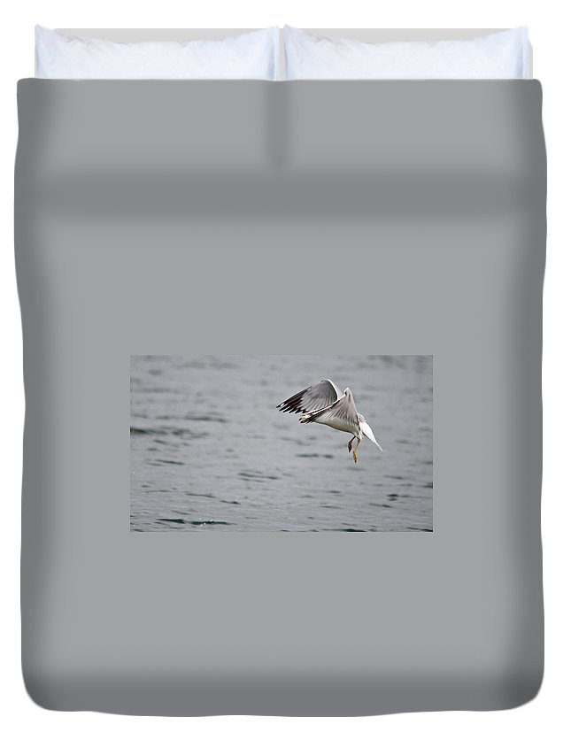 Roy Williams Duvet Cover featuring the photograph Eye Of The Seagull by Roy Williams