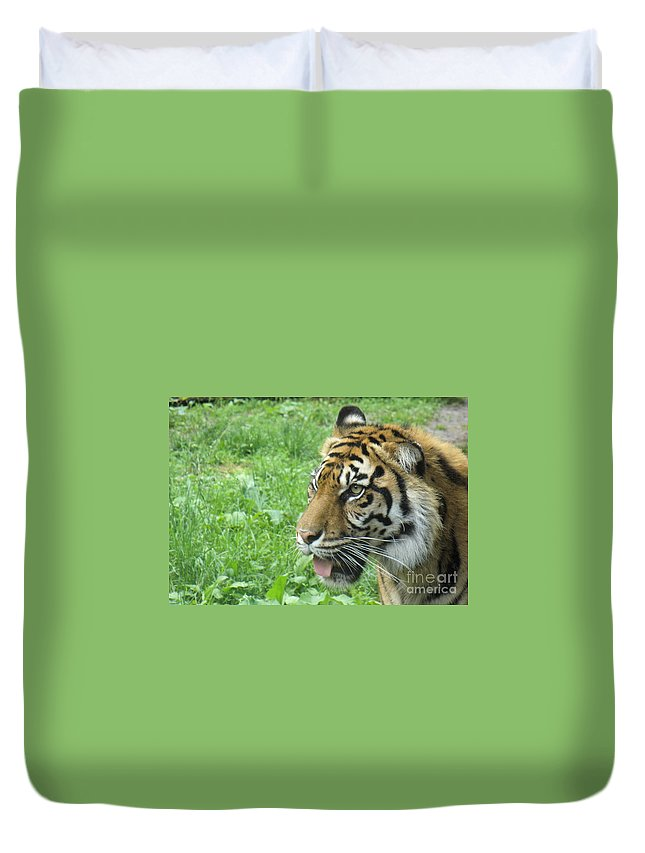 Animal Duvet Cover featuring the photograph Eye Of The Tiger by Lingfai Leung