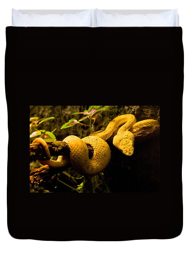 Yellow Duvet Cover featuring the photograph Eyelash Viper by Douglas Barnett