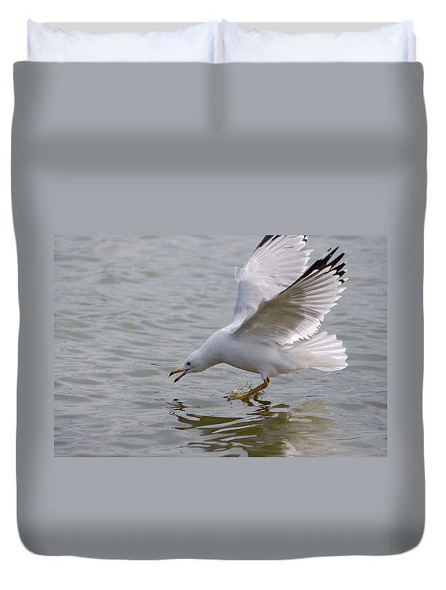 Roy Williams Duvet Cover featuring the photograph Eyes On The Prize by Roy Williams