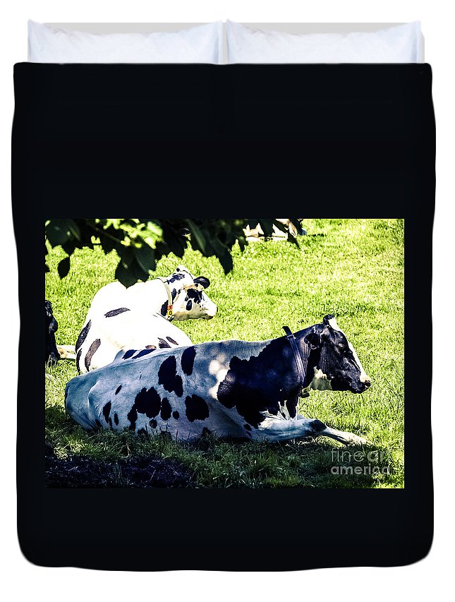 Dairy Cattle Duvet Cover featuring the photograph F0040442-9jpg by David Fabian