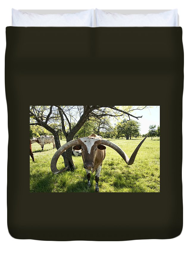 Longhorn Duvet Cover featuring the photograph Fabulous Texas Longhorn by Kathy Clark