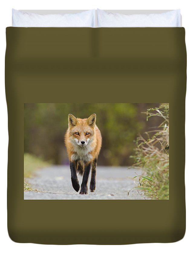 Fox Duvet Cover featuring the photograph Face To Face by Mircea Costina Photography