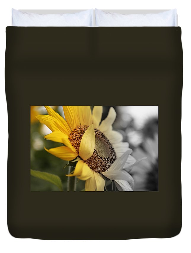 Yellow Duvet Cover featuring the photograph Faded Sunflower by Melvin Busch