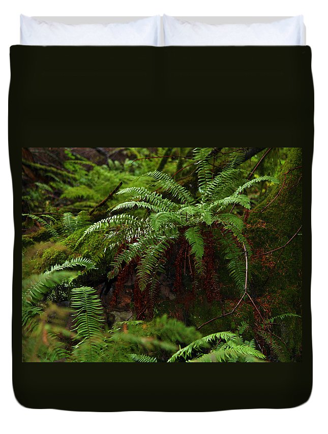 Fern Duvet Cover featuring the photograph Fairy Hideaway by Jeanette C Landstrom
