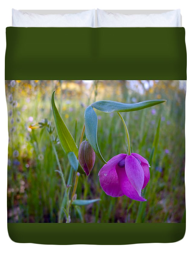 Pink Globelily Duvet Cover featuring the photograph Fairy Lantern In Park Sierra-ca by Ruth Hager