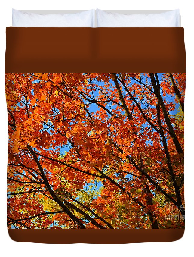 Leaves Duvet Cover featuring the photograph Fall Beauty by Dyana Rzentkowski