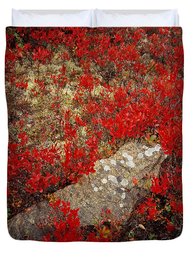 Maine Duvet Cover featuring the photograph Fall Blueberries And Moss by Tom Daniel