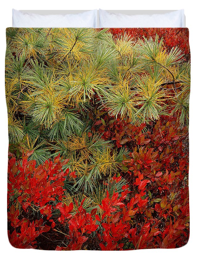 Maine Duvet Cover featuring the photograph Fall Blueberries And Pine-sq by Tom Daniel