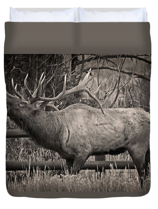 Fall Bugling Duvet Cover featuring the photograph Fall Bugling by Wes and Dotty Weber