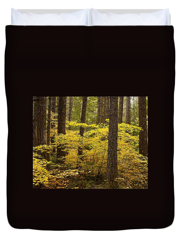 Forest Duvet Cover featuring the photograph Fall Foliage by Belinda Greb