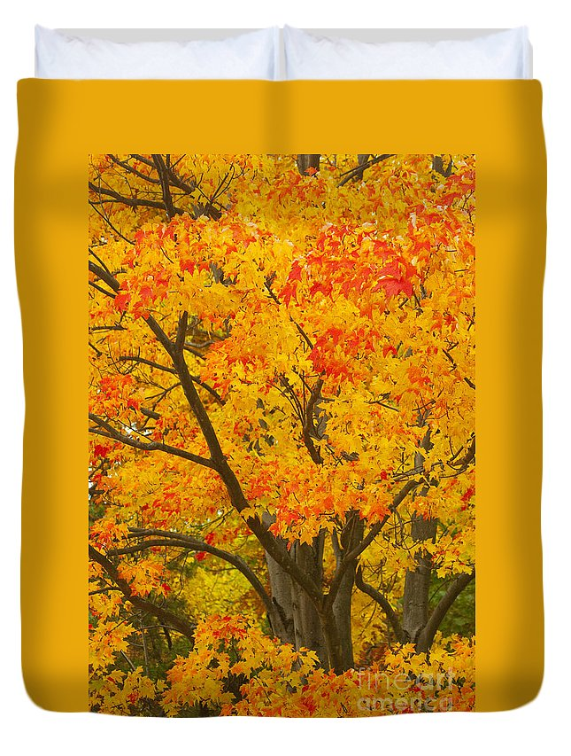 Fall Colors Duvet Cover featuring the photograph Fall In Pennsylvania by Paul W Faust - Impressions of Light