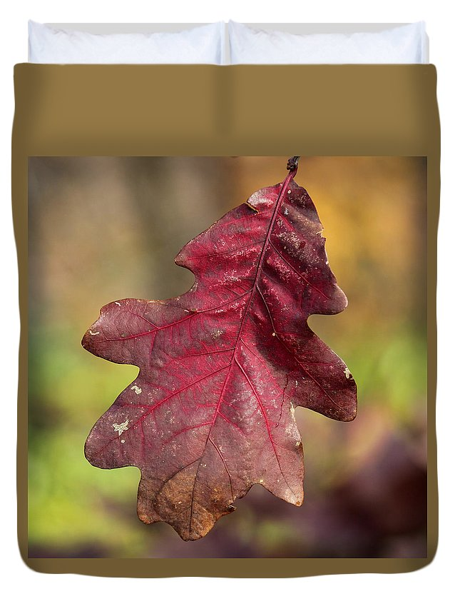 Fall Colors Duvet Cover featuring the photograph Fall Oak Leaf by Harold Hopkins
