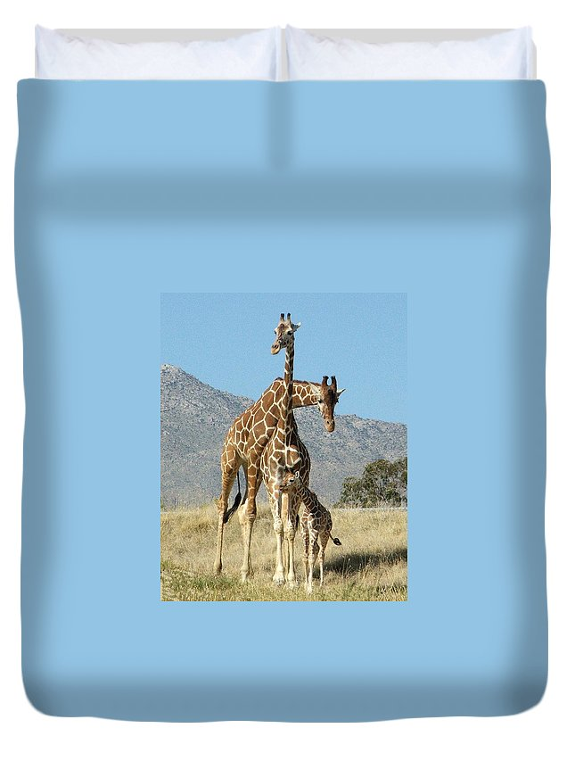 Giraffe Duvet Cover featuring the photograph Family Portrait by Patricia Quandel