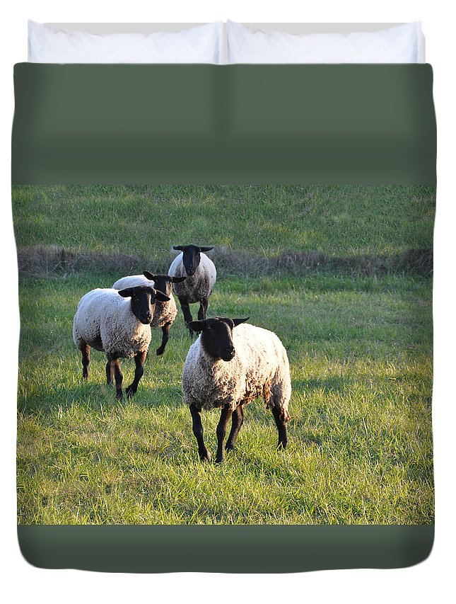 Animals Duvet Cover featuring the photograph Fancy Free by Jan Amiss Photography