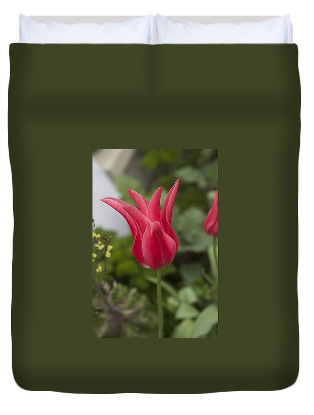 Tulip Duvet Cover featuring the photograph Spiky Tulip by Cheryl Gayser