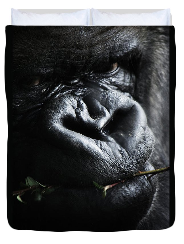 Animal Duvet Cover featuring the photograph Father First by The Artist Project