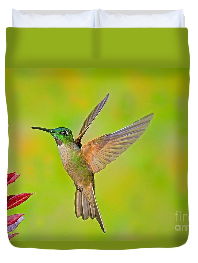 Fauna Duvet Cover featuring the photograph Fawn-breasted Brilliant Hummingbird by Anthony Mercieca