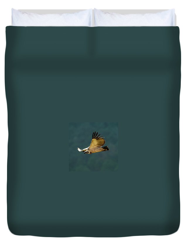 Africa Duvet Cover featuring the photograph Feathers In Flight by Alistair Lyne