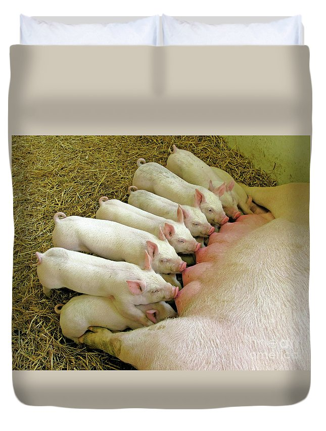 Pig Duvet Cover featuring the photograph Feeding The Family by Ann Horn