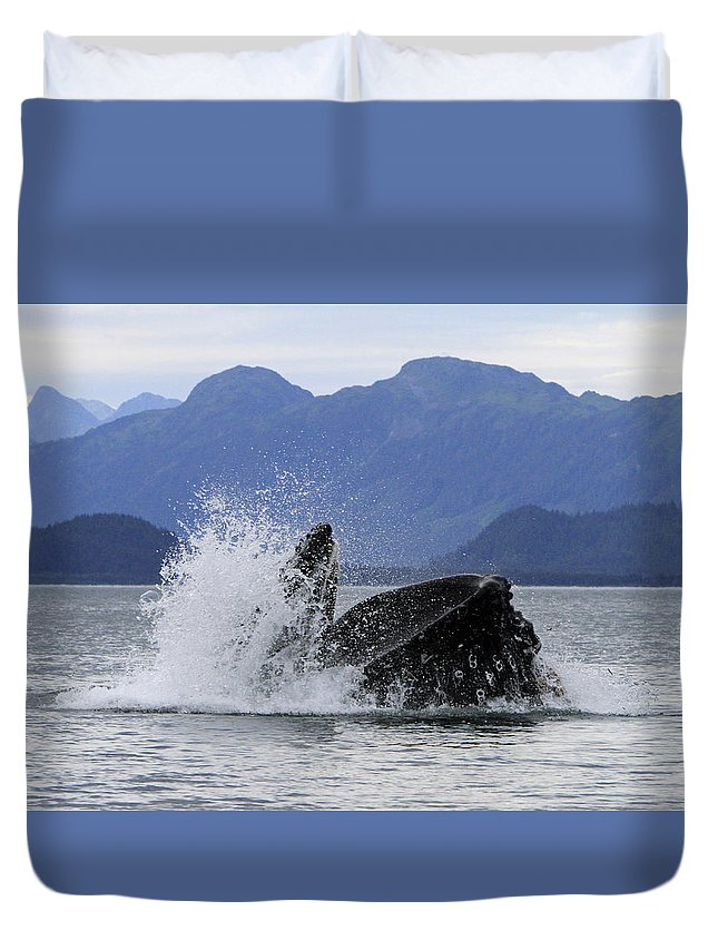 Humpback Whale Duvet Cover featuring the photograph Feeding Time by Shoal Hollingsworth