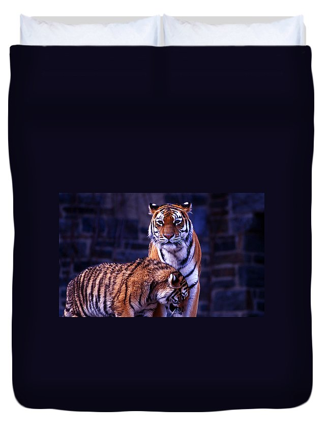 Nature Duvet Cover featuring the photograph Feline Love by Skip Willits