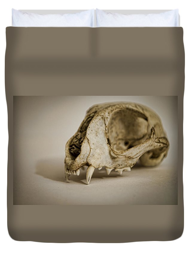 Cat Duvet Cover featuring the photograph Felis Catus by Heather Applegate