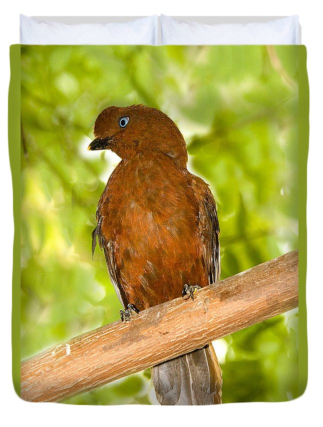 Fauna Duvet Cover featuring the photograph Female Andean Cock-of-the-rock by Anthony Mercieca