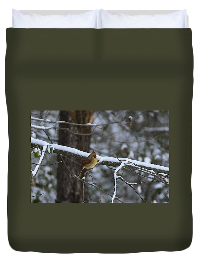 Cardinalidae Duvet Cover featuring the photograph Female Cardinal In Snow by Steve Samples